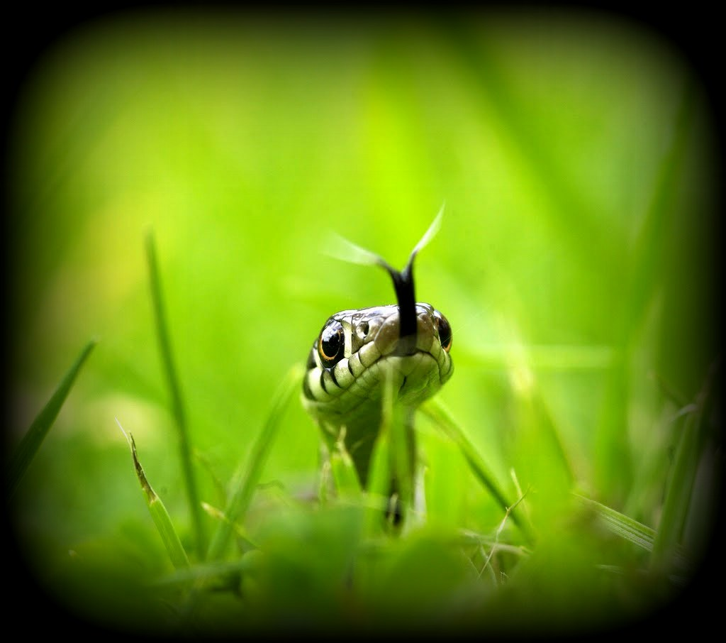 This image has an empty alt attribute; its file name is snake-green-grass-close-up.jpg